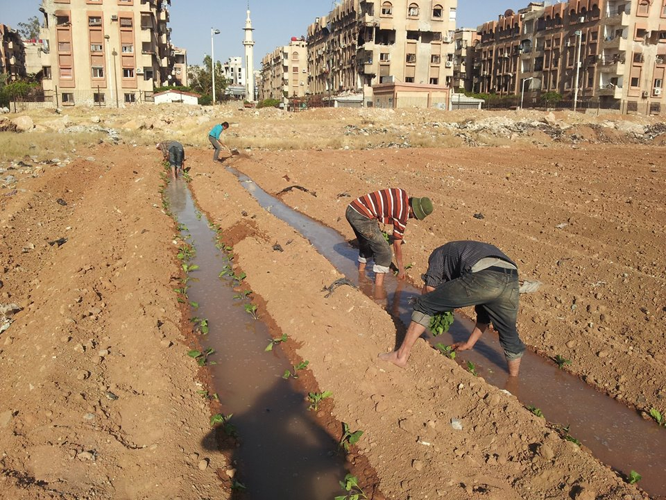 Agriculture in a city under siege (Yarmouk)