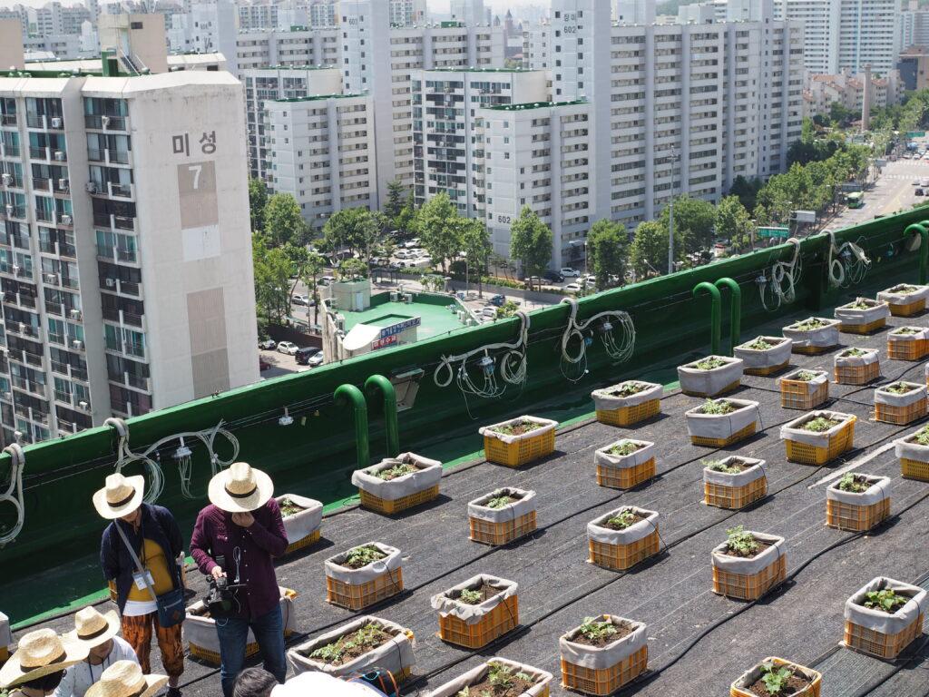 Dachgarten in Seoul