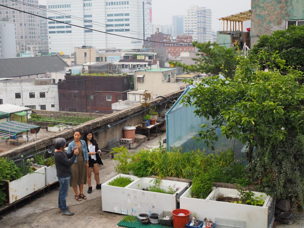 Dondaemun Rooftop Paradise in Seoul